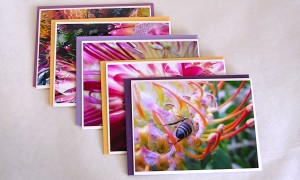 Gift card set of 5