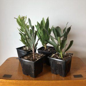 Pincushion 4 Pack